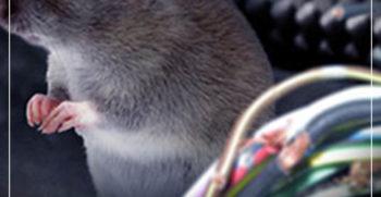 Motor mogok karena kabel di gigit tikus? ini solusinya 2